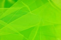 Grüner Schleier Stockfotos