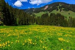 Grüner Schweizer Alps Stockfotografie