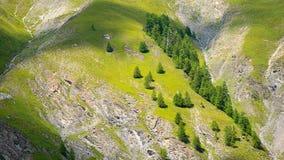 Grüner Sommer lizenzfreie stockfotografie