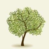 Grüner Sommerbaum lizenzfreie abbildung