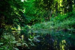 Grüner Sommerwald und ruhiger Fluss Stockfoto