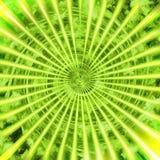 Grüner Sonnenschein Lizenzfreie Stockfotos