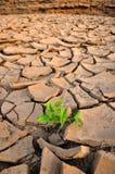 Grüner Sprössling, der in getrocknetem Land wächst Lizenzfreie Stockfotos
