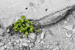 Grüner Sprössling, der vom Startwert für Zufallsgenerator wächst Frühlingssymbol, Konzept des neuen Lebens Lizenzfreies Stockfoto