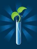 Grüner Sprössling vom Reagenzglas Lizenzfreies Stockfoto