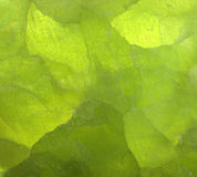 Grüner Steinhintergrund Lizenzfreie Stockfotos