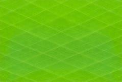 Grüner Streifenmusterhintergrund Lizenzfreies Stockbild