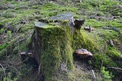 Grüner Stumpf Stockbild