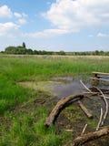 Grüner Sumpf Stockbild