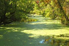 Grüner Sumpf an Raritan-Kanal Stockfotos