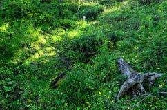 Grüner Sunny Forest Glade Abloom mit Blumen Lizenzfreie Stockfotos