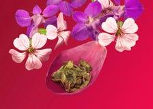 Grüner Tee, Blume Stockfotos