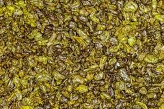Grüner Tee des Schießpulvers Stockfotos