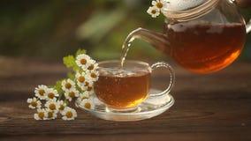 Grüner Tee mit Kamille in der Schale stock video
