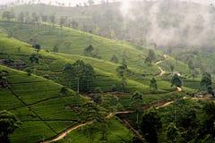 Grüner Tee terrasses im Hochland von Sri Lanka Lizenzfreie Stockfotos
