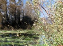 Grüner Teich Stockfotos