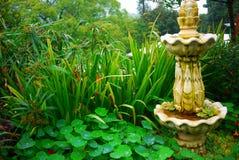 Grüner Teich Stockbild