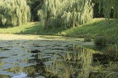 Grüner Teich Lizenzfreie Stockfotografie