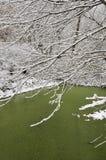 Grüner Teich im Winter Stockbilder