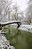 Grüner Teich im Winter Stockfoto