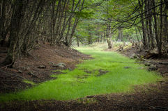 Grüner Teppich Stockfotografie