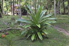 Grüner tropischer Busch auf einer Lichtung im Holz Stockbilder
