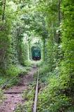 Grüner Tunnel Stockbild