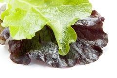Grüner u. roter Kopfsalat Stockbild