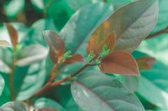 Grüner und brauner Blattnaturhintergrund Stockfoto