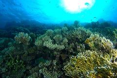 Grüner und gelber korallenroter Garten unter dem Wasser stockbilder