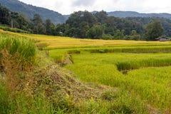 Grüner und gelber Schritt/terassenförmig angelegtes Reisfeld lizenzfreie stockbilder