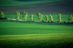 Grüner und grauer Frühlingsfeld-Zusammenfassungshintergrund lizenzfreies stockbild