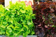 Grüner und purpurroter Kopfsalat Lizenzfreie Stockfotos
