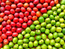 Grüner und roter Kaffee Beens stockfotografie