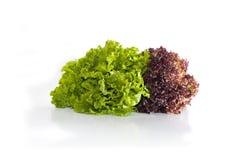 Grüner und roter Kopfsalat Lizenzfreie Stockfotos