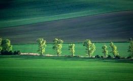 Grüner und tirquoise Frühlingsfeld-Zusammenfassungshintergrund stockfoto