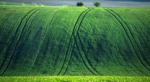 Grüner und tirquoise Frühlingsfeld-Zusammenfassungshintergrund lizenzfreie stockbilder