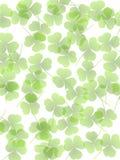 Grüner undurchlässiger Klee verlässt Hintergrund Stockfoto
