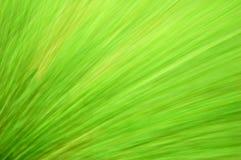 Grüner Unschärfehintergrund Lizenzfreies Stockfoto