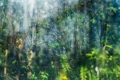 Grüner Unschärfehintergrund des botanischen Gartens St Petersburg Lizenzfreie Stockfotografie