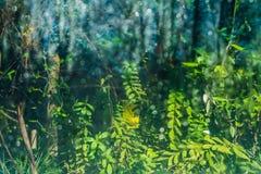 Grüner Unschärfehintergrund des botanischen Gartens St Petersburg Stockbild