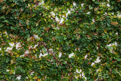 Grüner Urlaub auf Wand Lizenzfreies Stockfoto