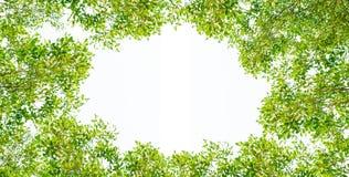 Grüner Urlaubrahmen stockfoto