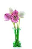 Grüner Vase und rosa Lotos Stockfoto