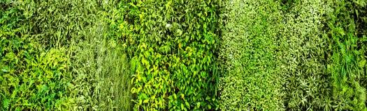 Grüner verschiedener Kriechpflanzenfarn und Stoffanlage auf Wand Lizenzfreies Stockbild