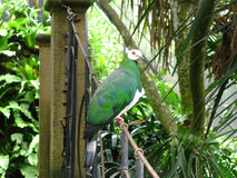Grüner Vogel Stockbild