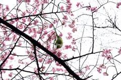 Grüner Vogel auf Niederlassung Stockbild