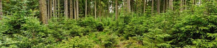 Grüner Wald stockbild