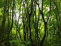 Grüner Wald Stockfotos
