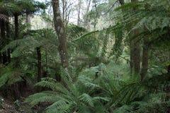 Grüner Wald Stockfotografie
